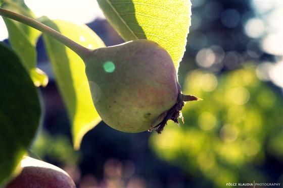 2013.06.23. júniusi gyümölcs (14)