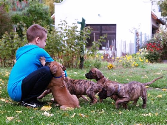 2013.10.18. Benike és a kiskutyák (3)