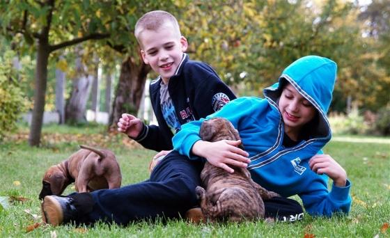 2013.10.18. Benike és a kiskutyák (7)