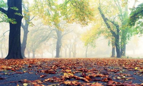 2013.10.25. ködös (2)