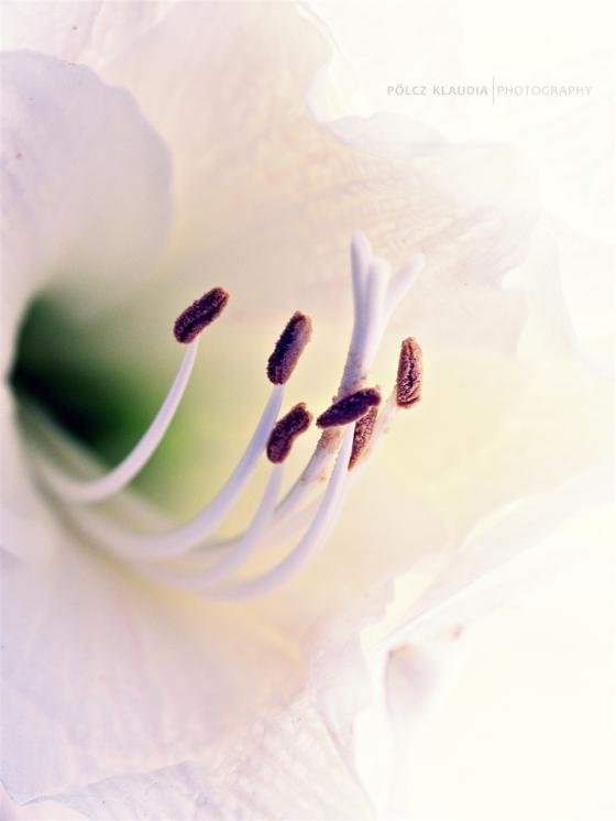 2013.11.27. virág (13)