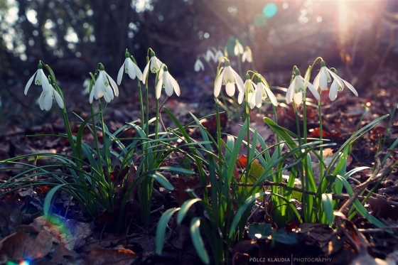 2014.02.25. hóvirágos délután (2)