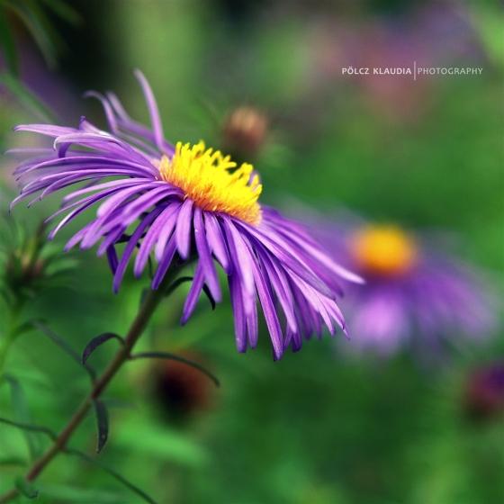 2014.09.07. botanikus kertben (12)