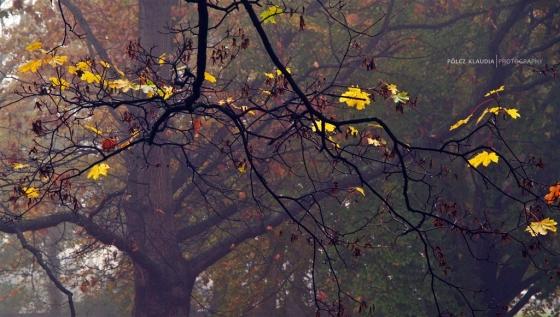 2014.11.02. Erzsébet kertben (4)