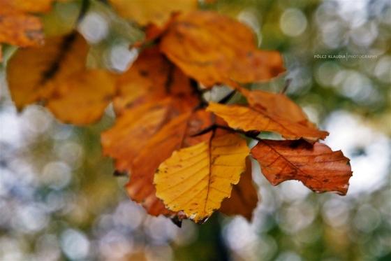2014.11.08. csak levelek