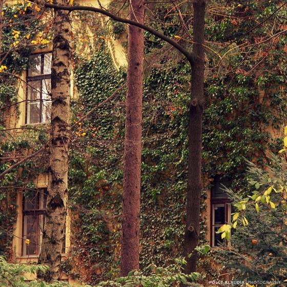 2014.11.21. botanikus kertben (21)